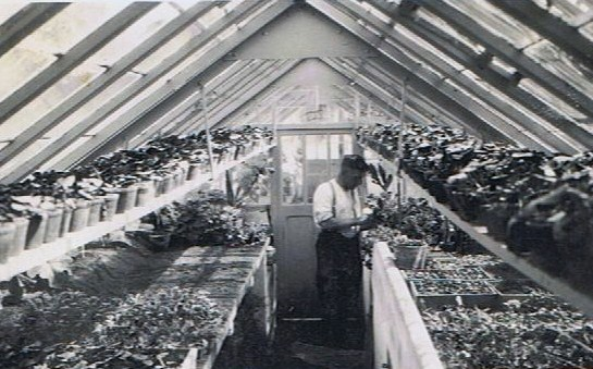 Gärtnerei Kiesewetter 1929